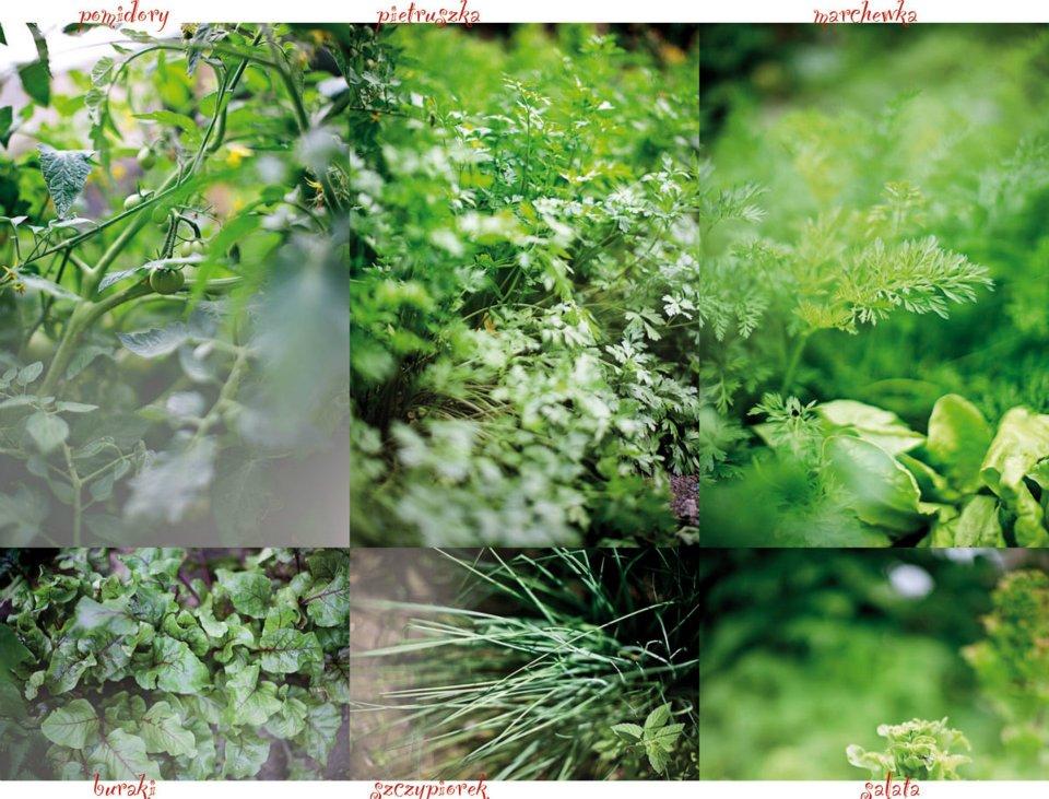 warzywa ogrodzie